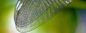 Bionik- Innovationen aus der Natur